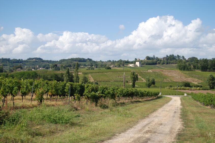 Grand Cru Experience Saine Colombe Vineyards
